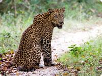 Sanjska potovanja, Šri Lanka, Velika tura po Šri Lanki